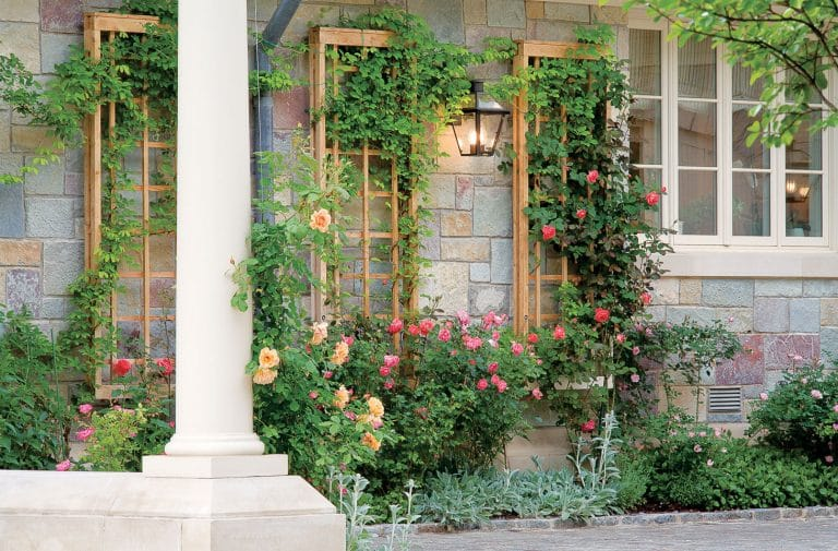 Add Interest to Your Yard with a Garden Trellis