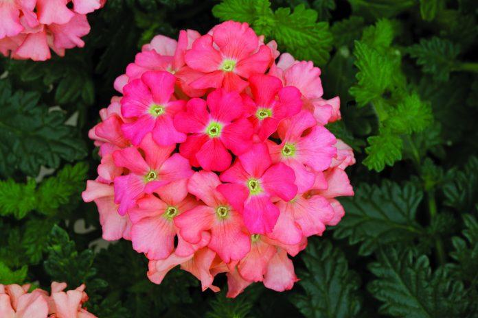 Drought-Tolerant-Plants