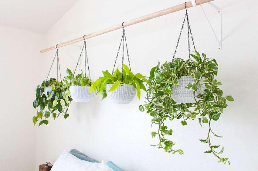Hanging-Garden-Plants