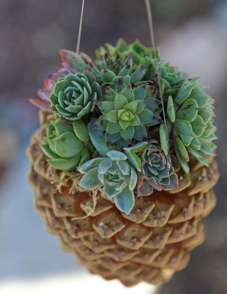 Pine-Cone-Covered-Planters