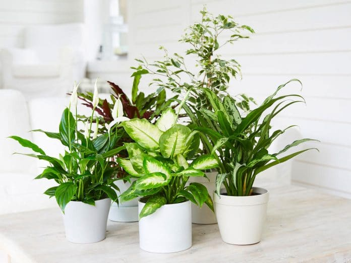 houseplants-for-beginners