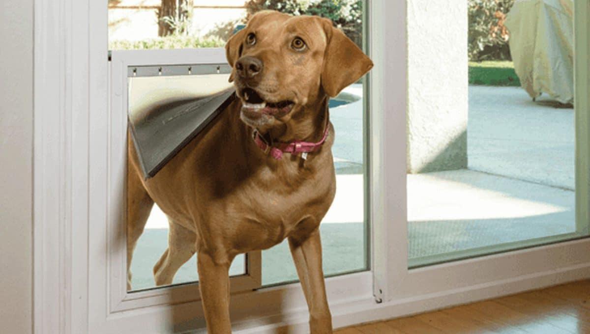 How To Build A Patio Pet Door Wohomen
