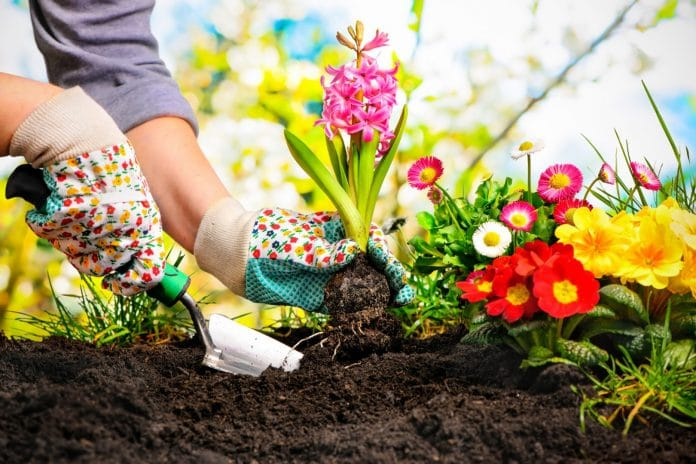 Avoid-Most-Common-Gardening-Mistakes