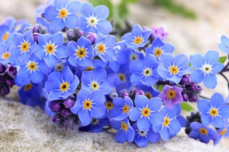 5 Beautiful Blue Flowers