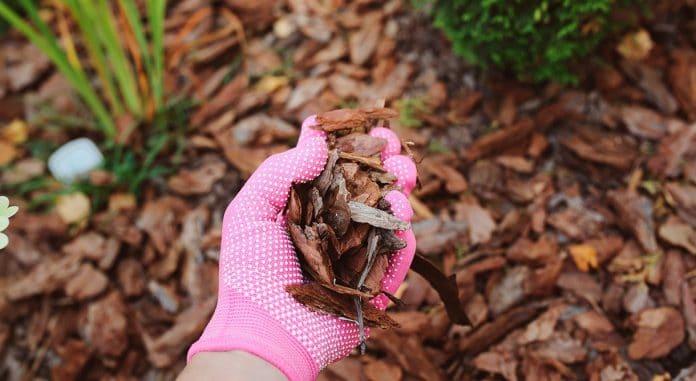 Control-Mulch-Fungus