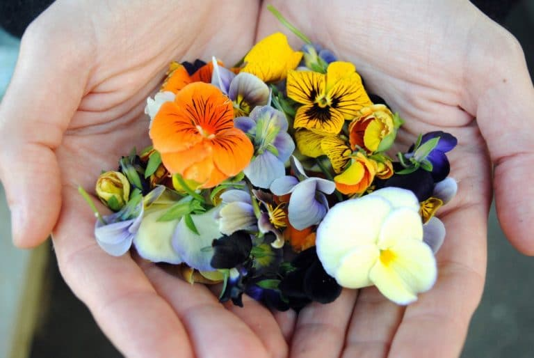 Edible Flowers Decorate the Plate