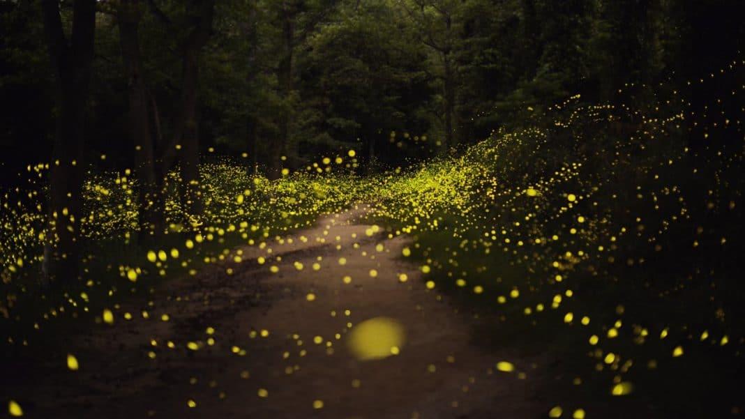 Firefly-Theme