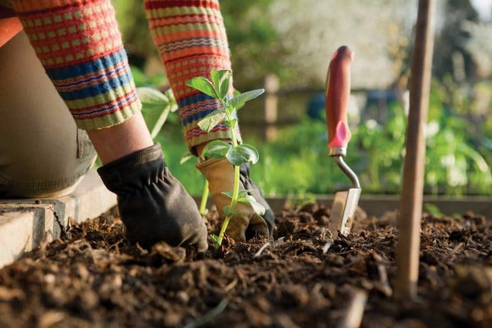 Gardening-Problems-and-Solutions