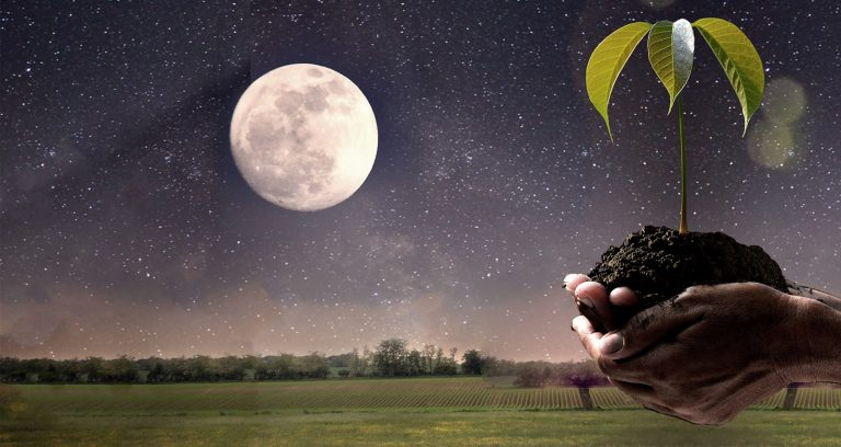 Garden Planting by the Moon's Phases