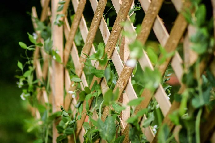 Make-A-Garden-Trellis-Easily