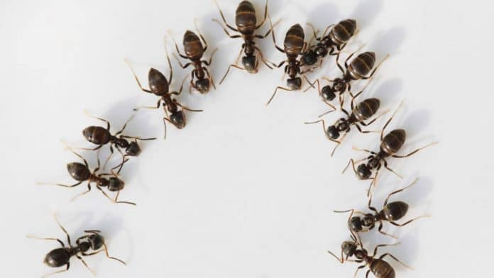 Natural-Ways-to-Get-Rid-of-Ants