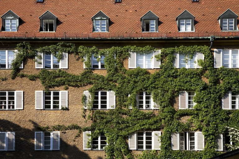 How to Remove Climbing Vines from Stucco