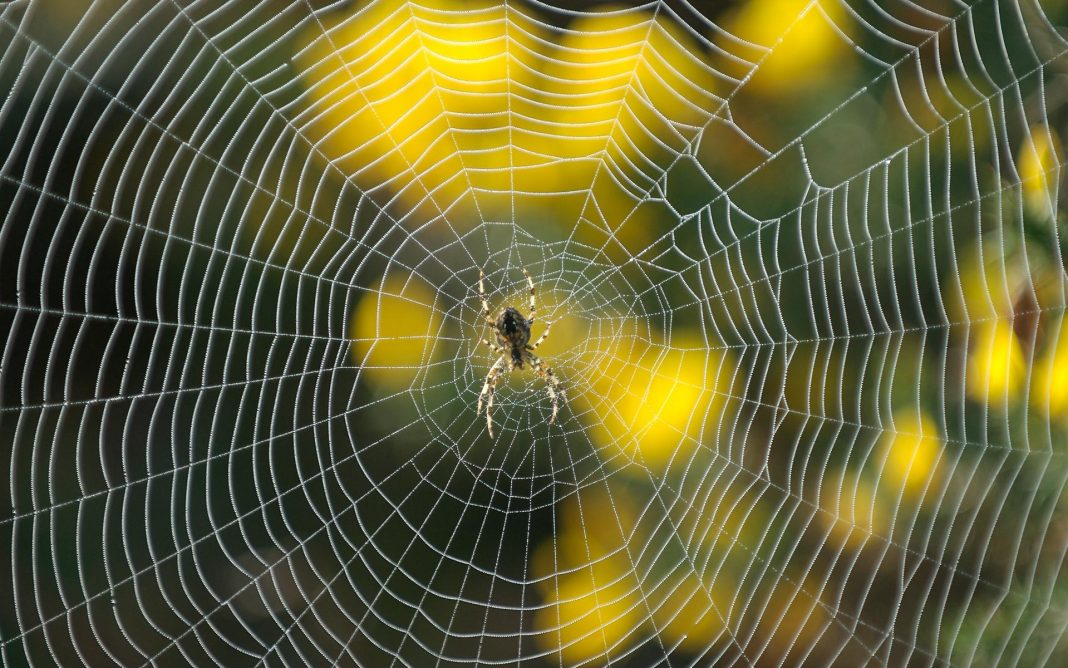 Spray-for-Spiders-Outside
