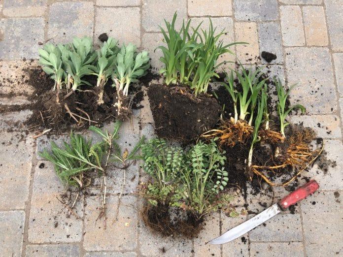 Spring-Gardening-Tasks