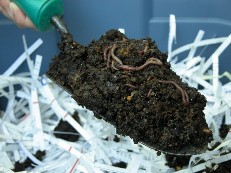 How to Make a Worm Composting Box for Vermicomposting