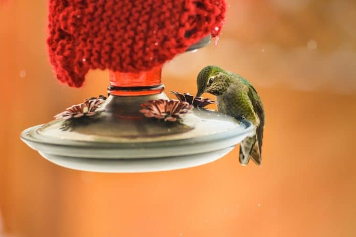 Best-Glass-Hummingbird-Feeder