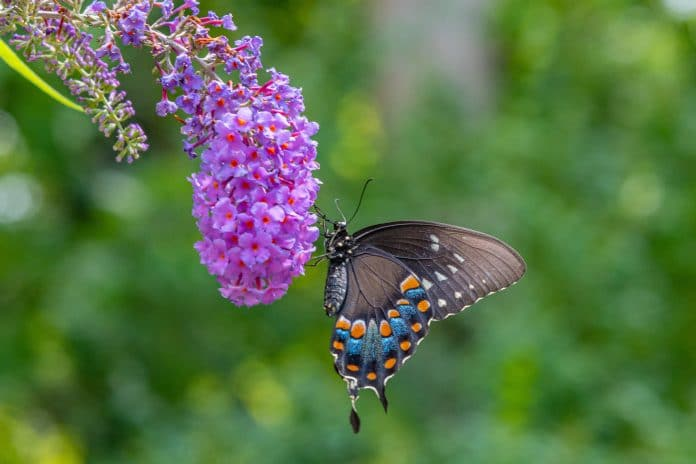 How-to-Build-a-Butterfly-Garden