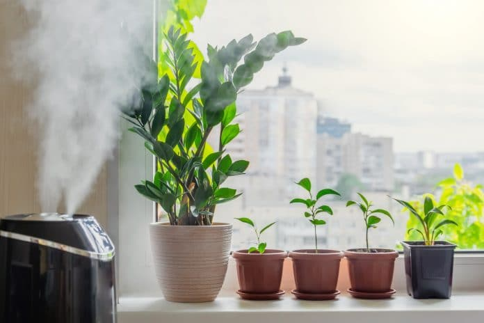 Best-Humidifier-for-Plants