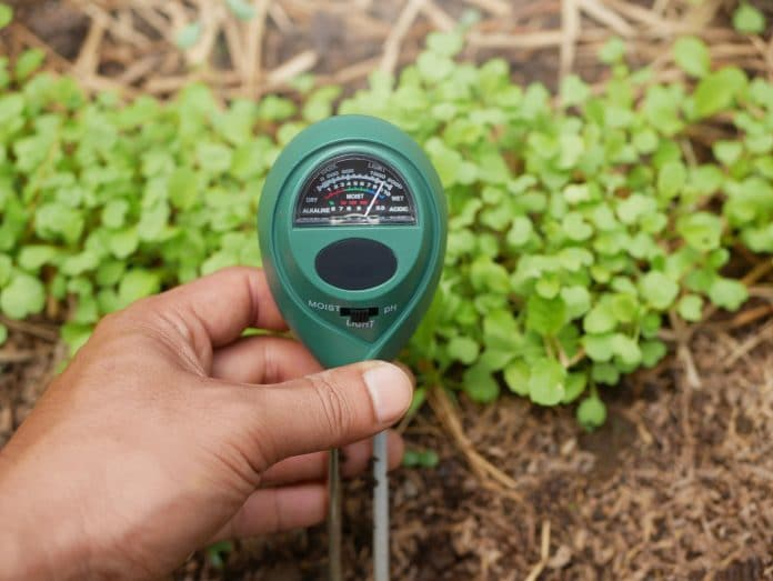 Best-Moisture-Meter-for-Plants