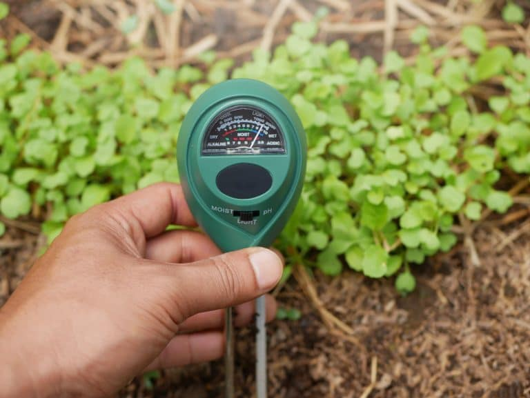 The 5 Best Moisture Meter For Plants (2021)